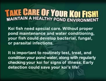 Koi Fish Care North County San Diego Koi Pond Maintenance
