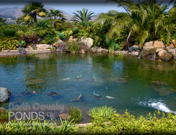 Pond care north county san diego koi pond maintenance for Maintaining a fish pond