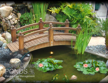 San Diego Pond Service, North County Ponds, North County Pond Service,  Rancho Santa ...